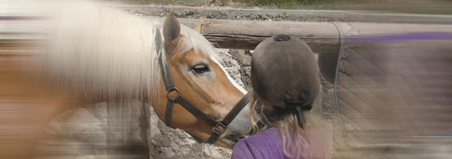 Anna-Pferd